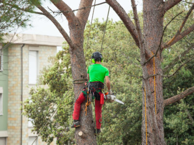 Tree Surgery: When You Might Need a Tree Dismantling