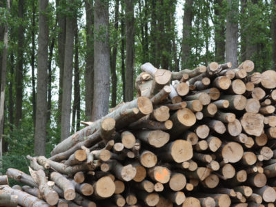 Is a Log-Fuelled Biomass Boiler For You?