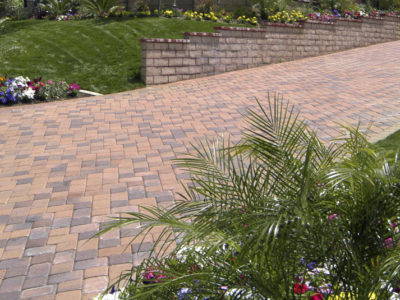 4 Plants to Spruce up your Driveway