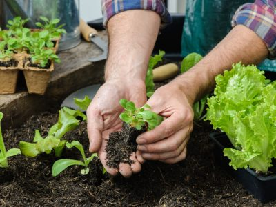 3 Ways to Grow Food All Year Round