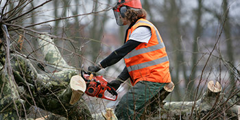 Tree surgery in London County